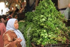 Voluntourism in Meknes