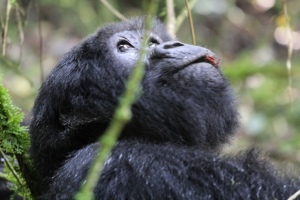 Rwanda voluntourism