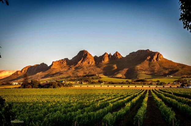 Taste magnificent wines, Stellenbosch. Photo credit: William on 500px.com