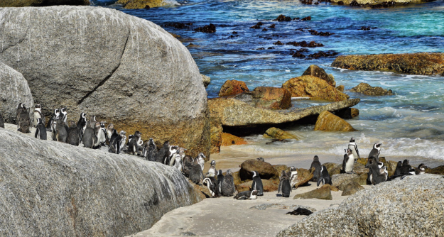 Visit the penguins on Boulders Beach, Photo credit: Ravi S R