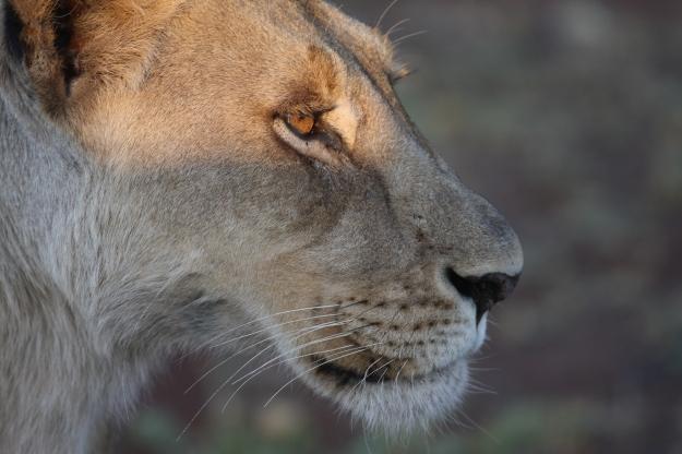 Get close to nature on safari