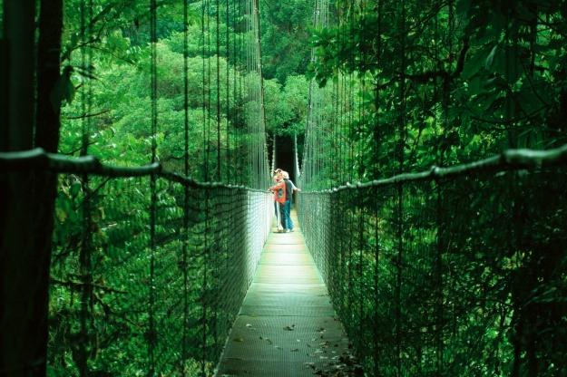 Walk through the canopy of a rainforest
