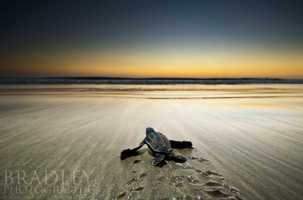 See and help with endangered turtles. Photo credit:  Jason Bradley on 500px.com