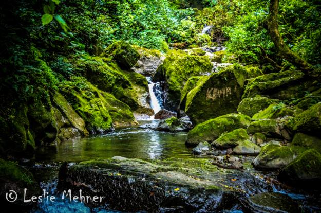Wander through stunning rain forests. Photo credit: Leslie Mehner on 500px.com