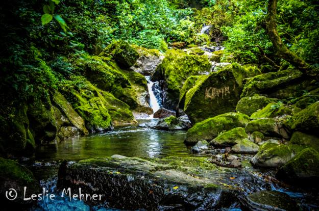 Wander through stunning rain forests. Photo credit: Leslie Mehner on 500px.com