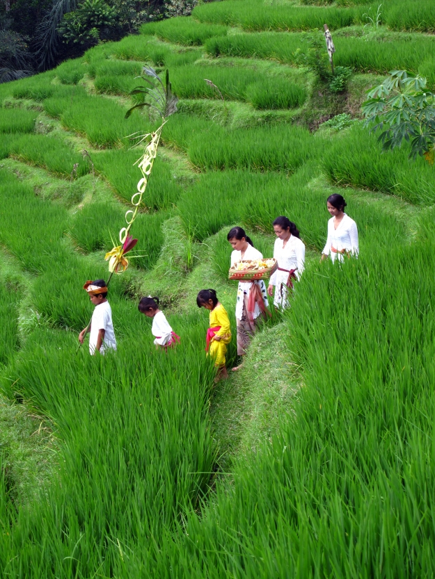 Visit the famous, beautifully crafted lush green rice paddies